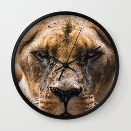 Intimidating lioness staring at you Wall Clock