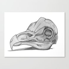 Barn Owl Skull Canvas Print