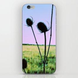 Dipsacus iPhone Skin