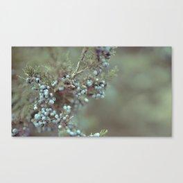 Cedar Berry Canvas Print