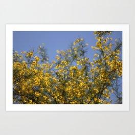 Golden Beams of Palo Brea Tree Art Print