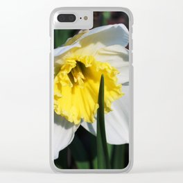 The first flowers in the park. Clear iPhone Case