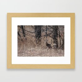Deer looking off into distance Framed Art Print