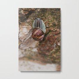 Escargot de Bourgogne Metal Print