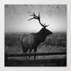Mystic Elk Canvas Print