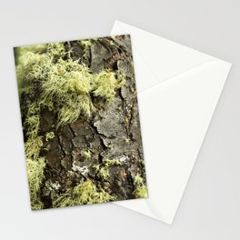 Patagonian Tree Trunk Stationery Cards