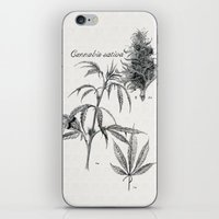 cannabis iPhone & iPod Skins featuring Cannabis sativa by 420Illustrations