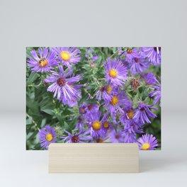 Purple Asters Mini Art Print