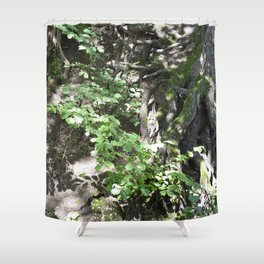 Roots and a tree 1 Shower Curtain