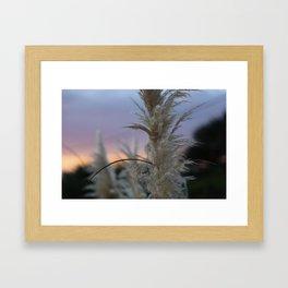 Pampas Grass & Sunset Framed Art Print