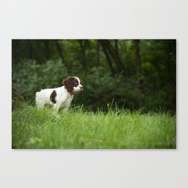 My Theodore ~The English Springer Spaniel~ 2 Canvas Print