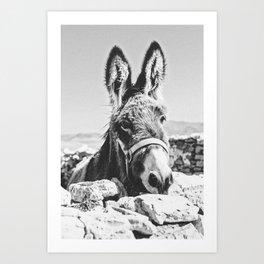 DONKEY / Spain Art Print