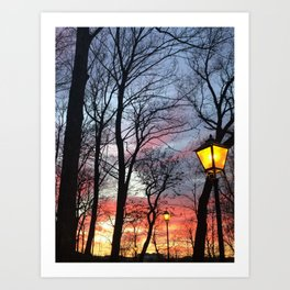 Street and Sky Lights in the Forest Art Print