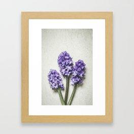 Three Lilac Hyacinth Framed Art Print
