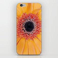 Daisy 3 iPhone Skin
