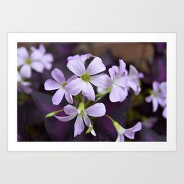 Flower   Flowers   Delicate Lavender Petals   Small Purple Flowers   Art Print