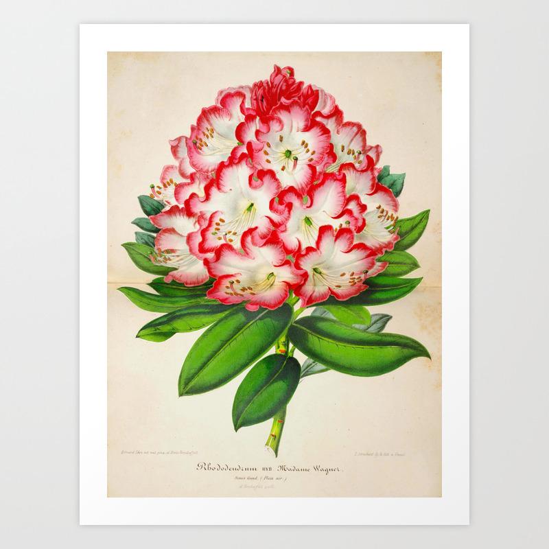 Rhododendron Madame Vintage Botanical Floral Flower Plant Scientific  Illustration Art Print
