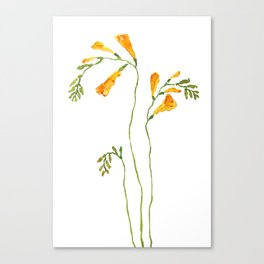 orange freesia watercolor Canvas Print