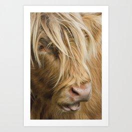 Highland Cow Portrait Kunstdrucke