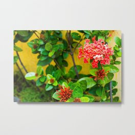 Flower Wall Metal Print