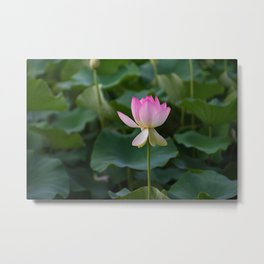 water lily #society6 #decor #buyart Metal Print