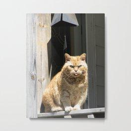 Cat Boy Metal Print