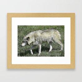Rexburg Idaho - Timber Wolf Framed Art Print