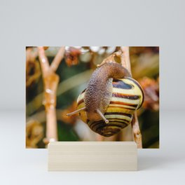 Snail Shell Inspection Photograph Mini Art Print