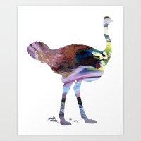 ostrich Art Prints featuring Ostrich  by FurittusDesigns