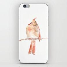 Lady Cardinal iPhone Skin
