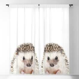Baby Hedgehog, Baby Animals Art Prints by Synplus Blackout Curtain
