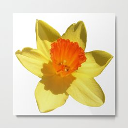 Daffodil Emblem Isolated On White Metal Print