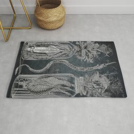 Victorian Zoological Study, Ocean life Specimens - Vintage Art Collage Rug
