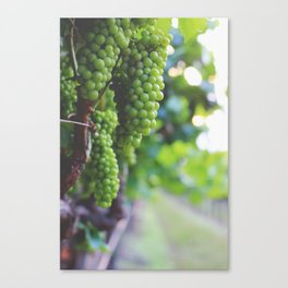 Drink More Wine in Napa Canvas Print