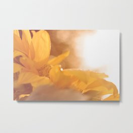 Sun Flare Sunflower Metal Print