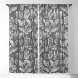 1904 Haeckel Chiroptera Sheer Curtain
