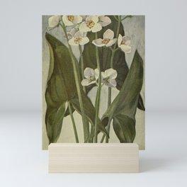 Vintage Botanical Print - Arrowhead Mini Art Print
