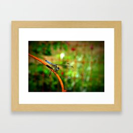 Digging Dragonflies  Framed Art Print