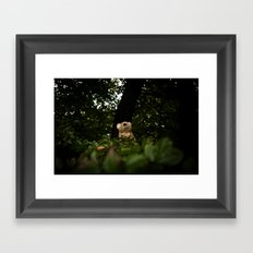 The Enchanted Forest (II) Framed Art Print
