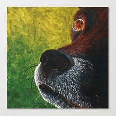 nosey fella Canvas Print