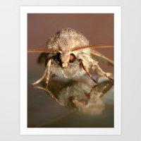 Moth - Common Quaker Art Print