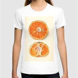 Vintage Painting of Tangerines T-shirt