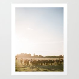 Curious Florida Cattle at Sunset / Florida Fine Art Film Photography Art Print