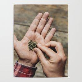 Young adult man holding marijuana cannabis Poster