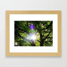 Suntree Framed Art Print