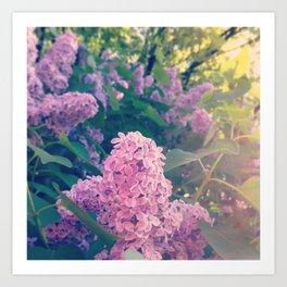 Lilac Bush Art Print