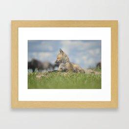 Fox pup Framed Art Print