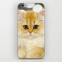 Very young red fluffy cat iPhone Skin