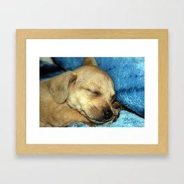 Tough Life Framed Art Print