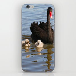 Black Swan and Cygnets iPhone Skin